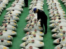 Fish Japan Business News